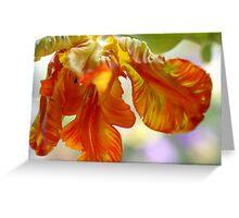 A fiery tulip Greeting Card