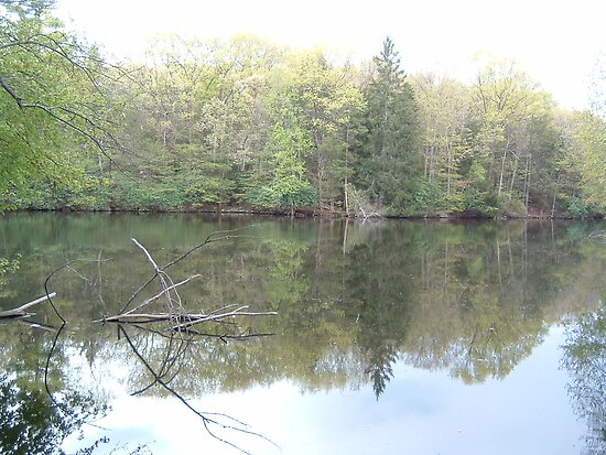 Pond and Foilage by Sinclere