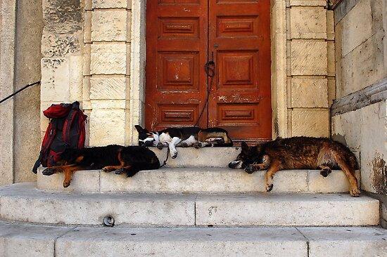 Arles, France 2009 by Marek Nõlvak