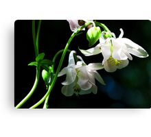 White Columbine - The Shade Garden Canvas Print