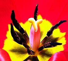 Centerpiece - Tulip 001-Sunny by dawiz1753