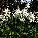 White Silk At Dusk by Daisy-May