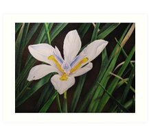 White butterfly iris Art Print