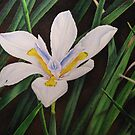 White butterfly iris by lanadi