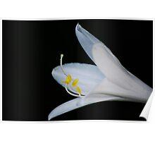 Hosta Bloom Poster