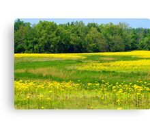 Fields of MUSTARD WEED..... Canvas Print