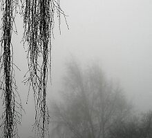 Hanging Branches In The Fog by SquarePeg