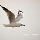 Seagull in Flight by dazzleng