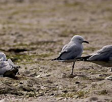 Seagulls Inline by dazzleng