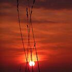 Rye Sunset by Ecohippy