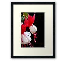 Red & white flower 7396 Framed Print