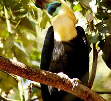 Huge toucan can hide hisself by loiteke