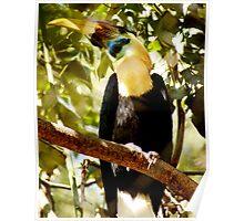 Huge toucan can hide hisself Poster