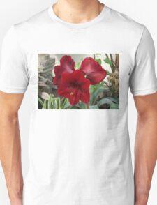 Christmas Red Amaryllis Flowers T-Shirt