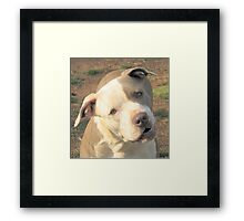 Did You Say Treat? Framed Print