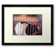 Joe Rat Framed Print