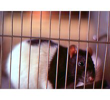 Joe Rat Photographic Print