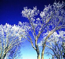 Winter Silver on Indigo by ionclad