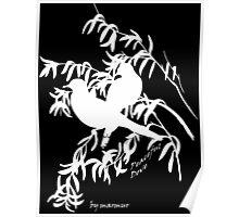 White Peaceful Dove Poster