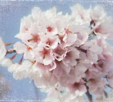 Baby Blue Pink Cherry Blossoms by BornBarefoot