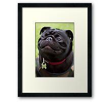 Happy Black Pug Dog Framed Print