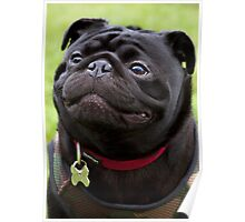 Happy Black Pug Dog Poster