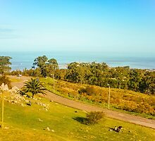 High View of Park and Coast in Montevideo by DFLC Prints