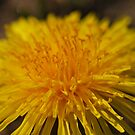 Just Dandy  by Michelle BarlondSmith