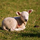 Mint Sauce by Gillen