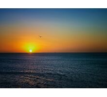Sea Sunset and a Bird Photographic Print