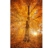 Exteme Fall Photographic Print