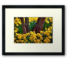 Coming Up Yellow Framed Print