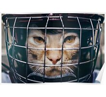 Le hockey cat - 10th life  Poster