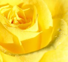 Good Morning Yellow by TeAnne
