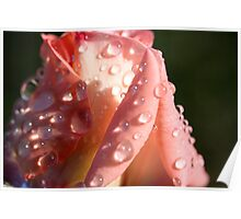 Champagne Bud with Water Beads Poster