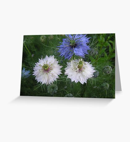 Fairy on love-in -the mist Greeting Card