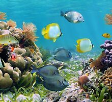 Underwater panorama with colorful tropical fish and sea life by Dam - www.seaphotoart.com