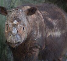 Baby Rhino by Kathy Newton