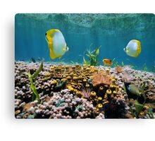 Coral garden underwater reflected on water surface Canvas Print