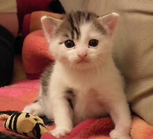 Our Cute KItty by delaol