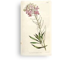 The Botanical magazine, or, Flower garden displayed by William Curtis V5 v6 1792 1793 0108 Cheiranthus Mutabilis, Changeable Wall Flower Canvas Print