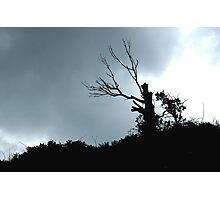 Clifftop Tree Photographic Print