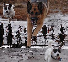 weeee this is  fun by David Ford Honeybeez photo
