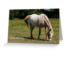 Caramel - NNEP Ottawa ON Greeting Card
