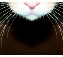 Cat Art - Super Whiskers Sticker
