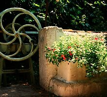 Water pump wheel Capestang France by Paul Pasco