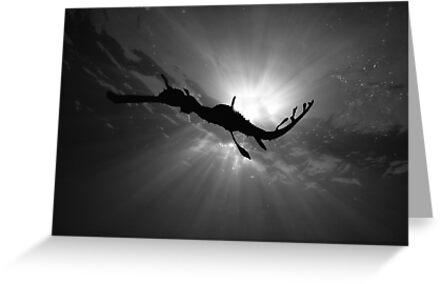Seadragon & Sunlight by MattTworkowski