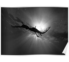 Seadragon & Sunlight Poster