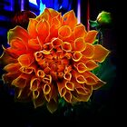 Giant Dahlia by Elaine Game