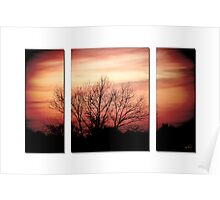 Sunset triptych with birch- February Poster